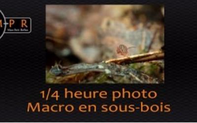 1/4h photo : Macro en sous-bois