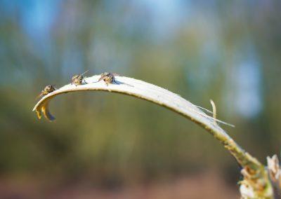 Resting flies